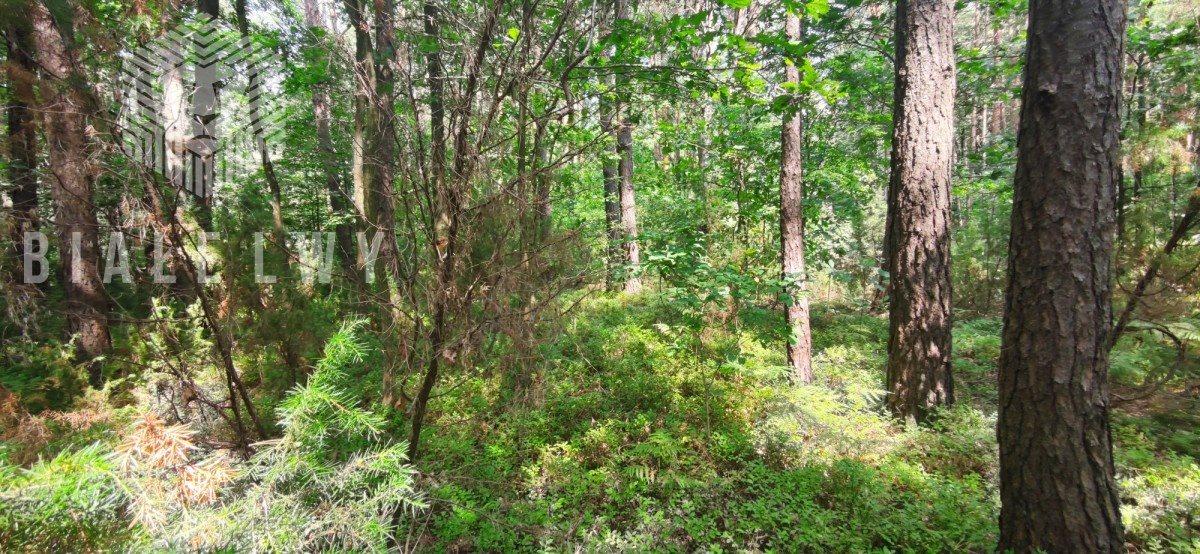 Działka leśna na sprzedaż Radachówka  1200m2 Foto 8