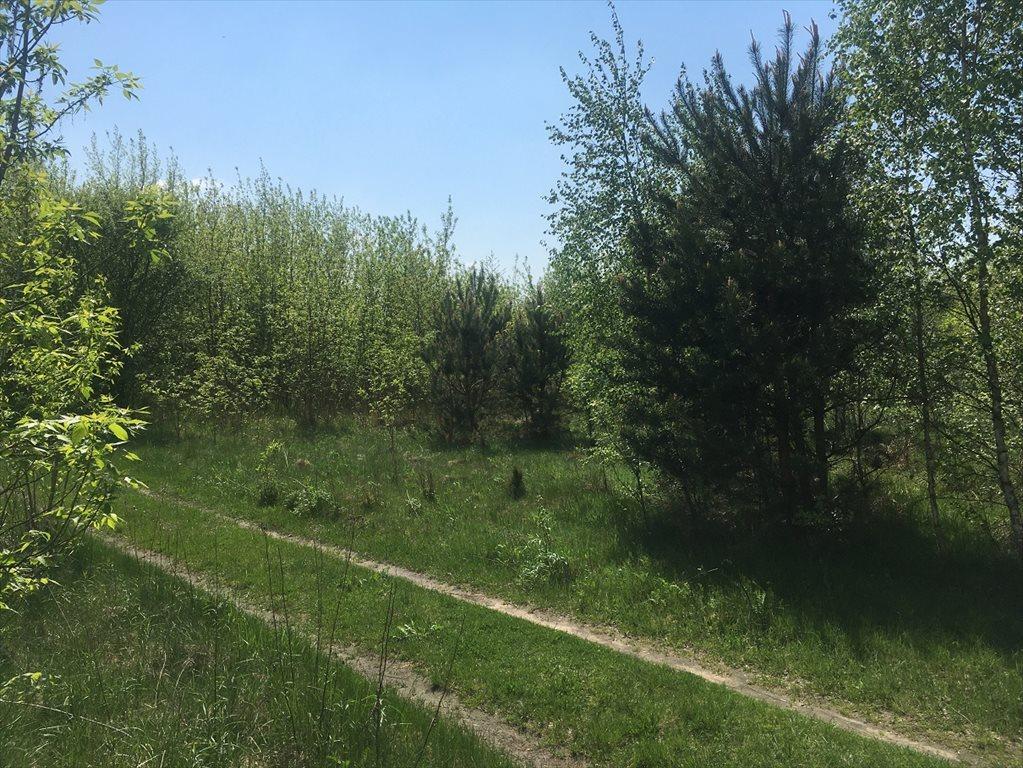 Działka rolna na sprzedaż Stare Babice, Wojcieszyn  1000m2 Foto 5