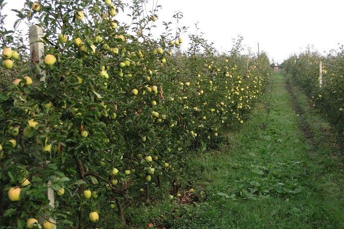Działka gospodarstwo rolne na sprzedaż Korzenna  114m2 Foto 3