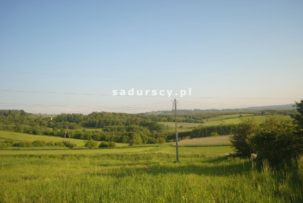 Działka leśna na sprzedaż Aleksandrów  50000m2 Foto 6