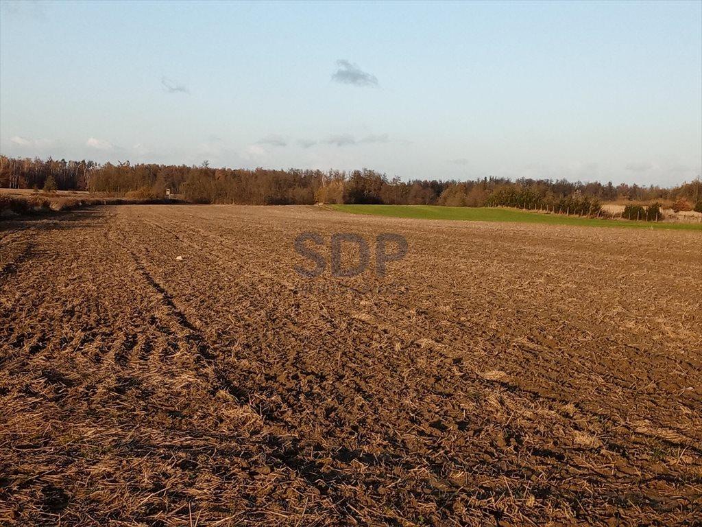 Działka rolna na sprzedaż Bogdaszowice  53800m2 Foto 1