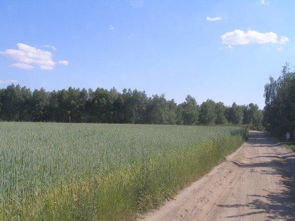 Działka siedliskowa na sprzedaż Parlino  11000m2 Foto 4