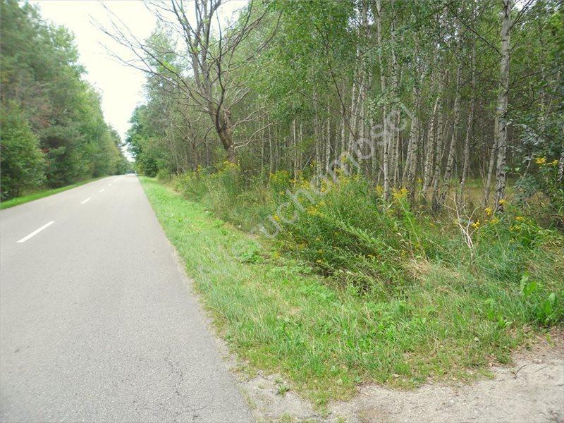 Działka leśna na sprzedaż Izabelin  27242m2 Foto 3
