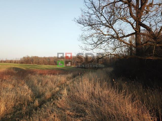 Działka siedliskowa na sprzedaż Bogdaszowice, Dębowa  28000m2 Foto 8