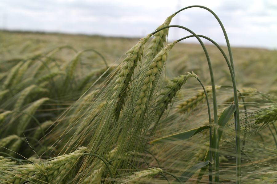 Działka rolna na sprzedaż Choszczno  3940000m2 Foto 1