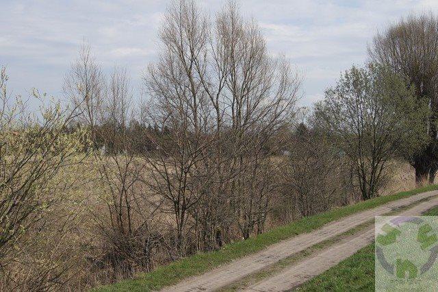 Działka rolna na sprzedaż Gdańsk, Olszynka, Olszyńska  11526m2 Foto 5