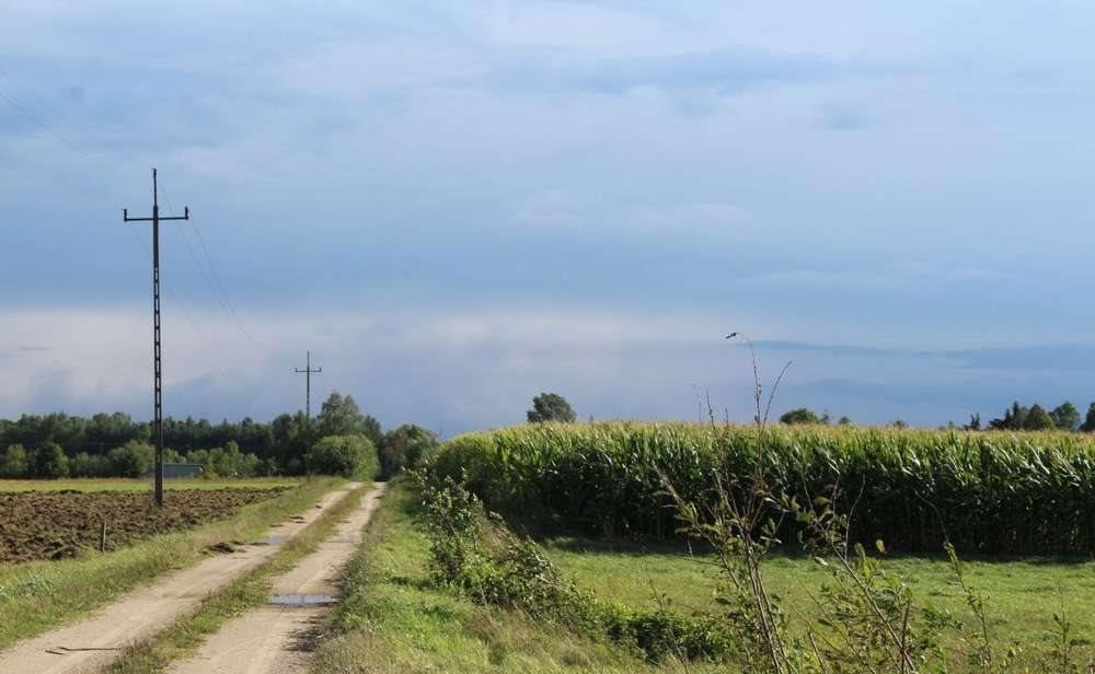 Działka rolna na sprzedaż Malesze  164100m2 Foto 7