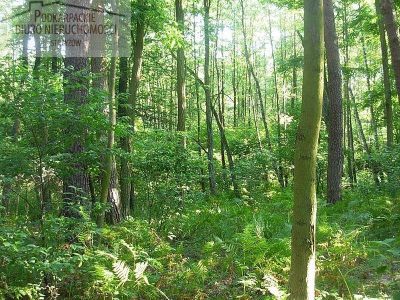 Działka leśna na sprzedaż Żyznów  5975m2 Foto 1