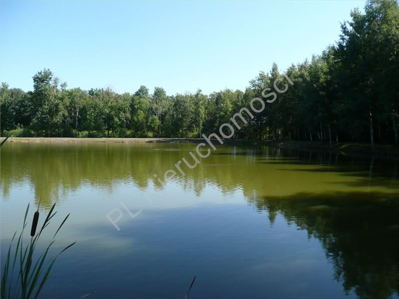 Działka rolna na sprzedaż Zimnice  20156m2 Foto 6