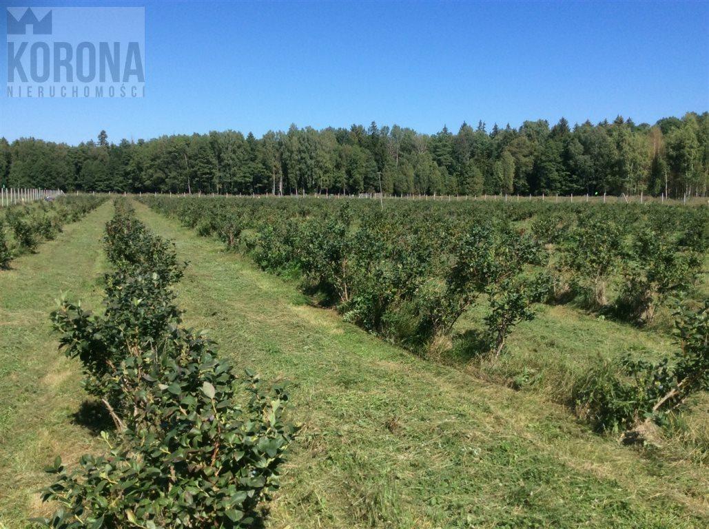 Działka rolna na sprzedaż Pasieki, Babia Góra  13300m2 Foto 6
