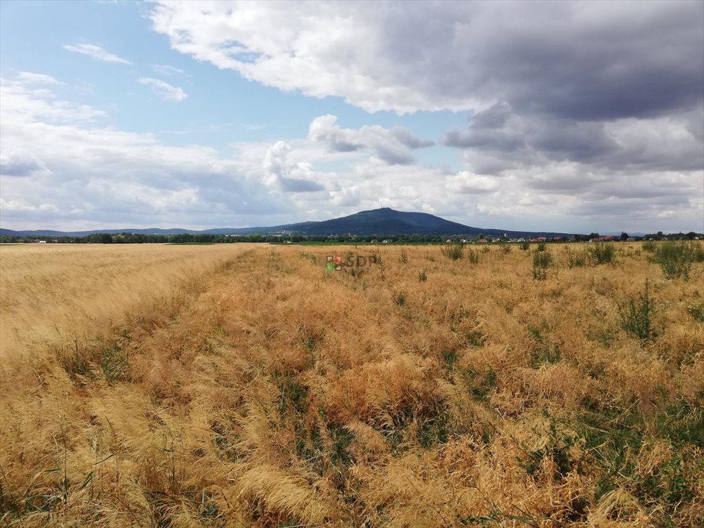 Działka rolna na sprzedaż Michałowice  77000m2 Foto 1