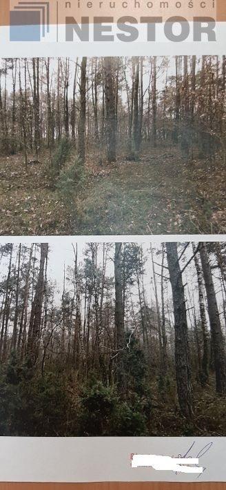 Działka leśna na sprzedaż Hołubla  25700m2 Foto 2