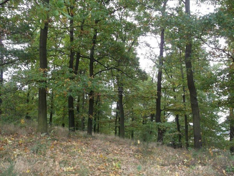 Działka leśna na sprzedaż Bolesławiec, Zabobrze  21908m2 Foto 4