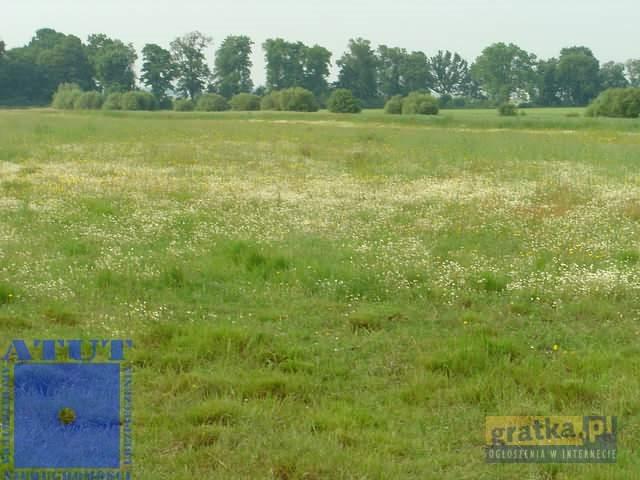 Działka rolna na sprzedaż Gliwice  15000m2 Foto 5