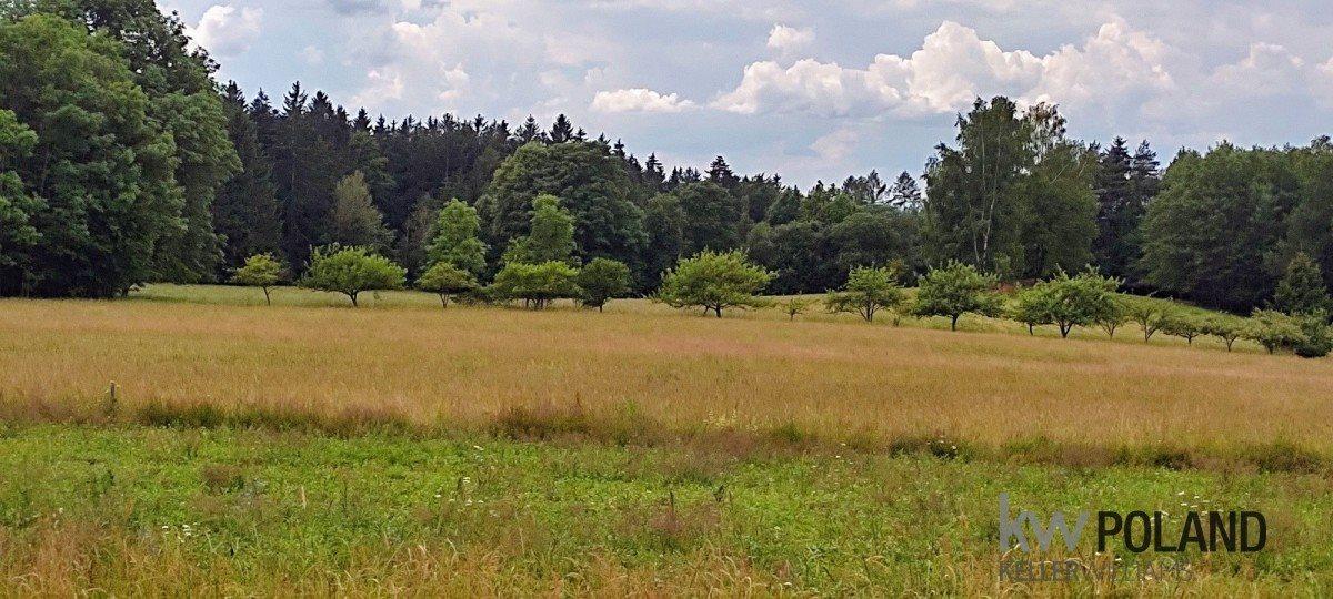 Działka rolna na sprzedaż Kudowa-Zdrój, Pstrążna  4386m2 Foto 8