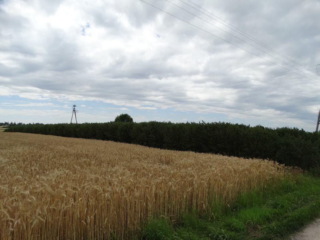 Działka rolna na sprzedaż Skrobów  10600m2 Foto 2