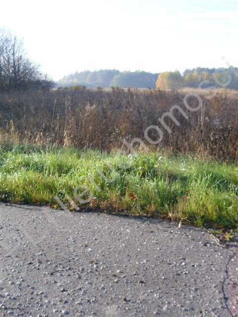 Działka rolna na sprzedaż Gurba  11800m2 Foto 5
