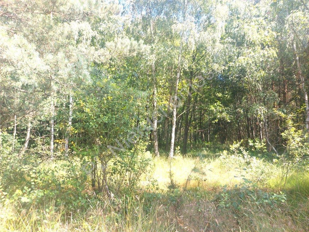 Działka rolna na sprzedaż Choiny  60500m2 Foto 12