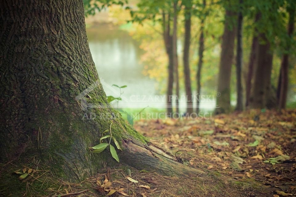 Działka leśna na sprzedaż Kazimierz Dolny, Dąbrówka  1391m2 Foto 1