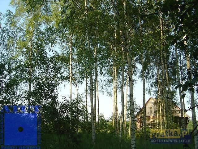 Działka leśna na sprzedaż Gliwice, Ok.rudy  10000m2 Foto 4