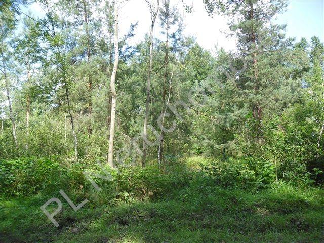 Działka rolna na sprzedaż Cisówka  30300m2 Foto 4