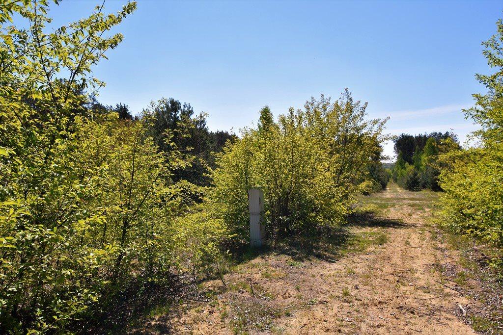 Działka rolna na sprzedaż Czyżemin  3100m2 Foto 3