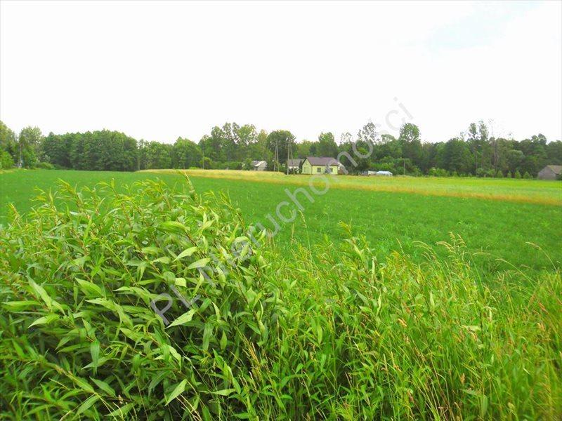 Działka rolna na sprzedaż Lubomin  14500m2 Foto 2