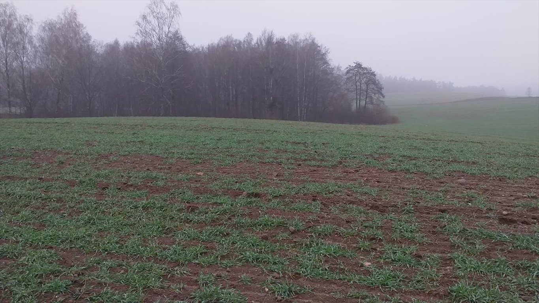Działka gospodarstwo rolne na sprzedaż Klucznik  7000000m2 Foto 4