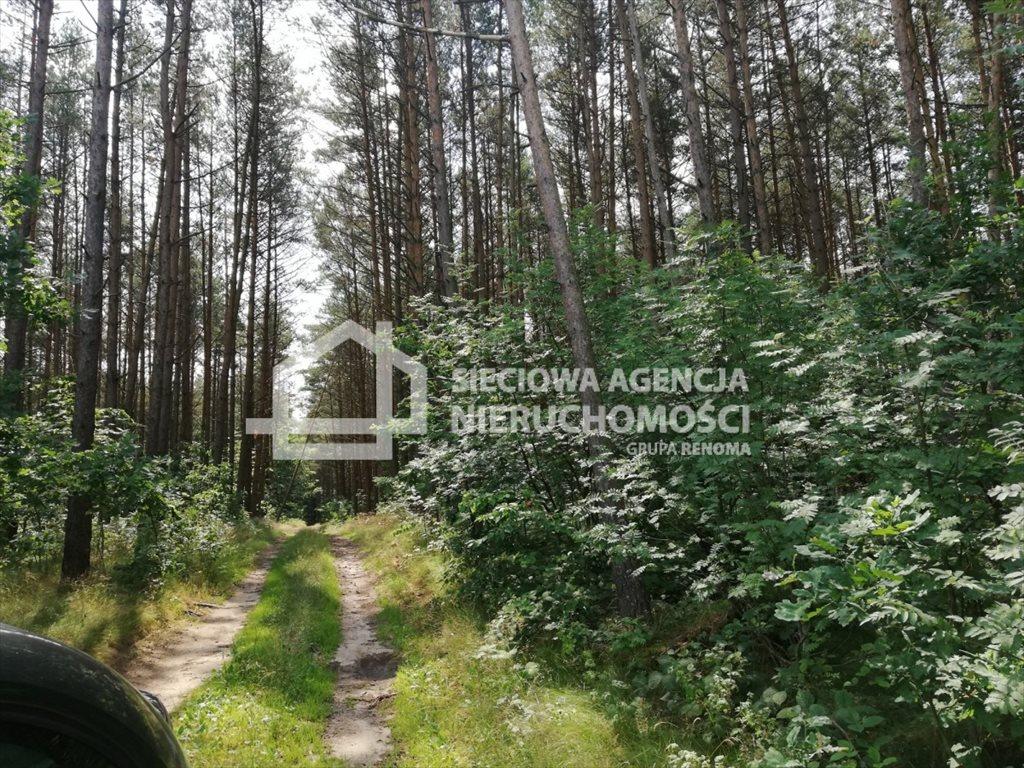 Działka rolna na sprzedaż Załęże  6400m2 Foto 3