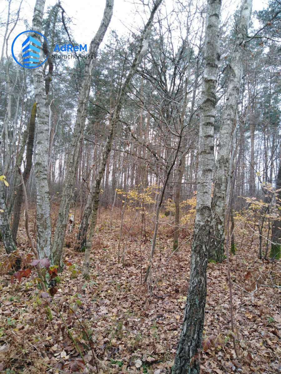 Działka leśna na sprzedaż Nowy Prażmów, Leśna  1521m2 Foto 7