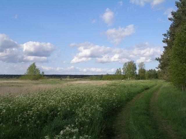 Działka rolna na sprzedaż Wołczkowo  9200m2 Foto 1