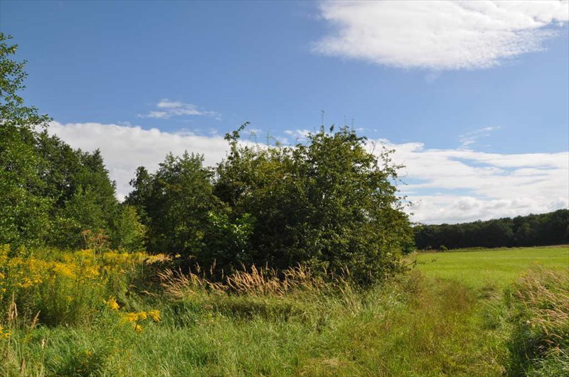 Działka rolna na sprzedaż Sulistrowice  4100m2 Foto 5