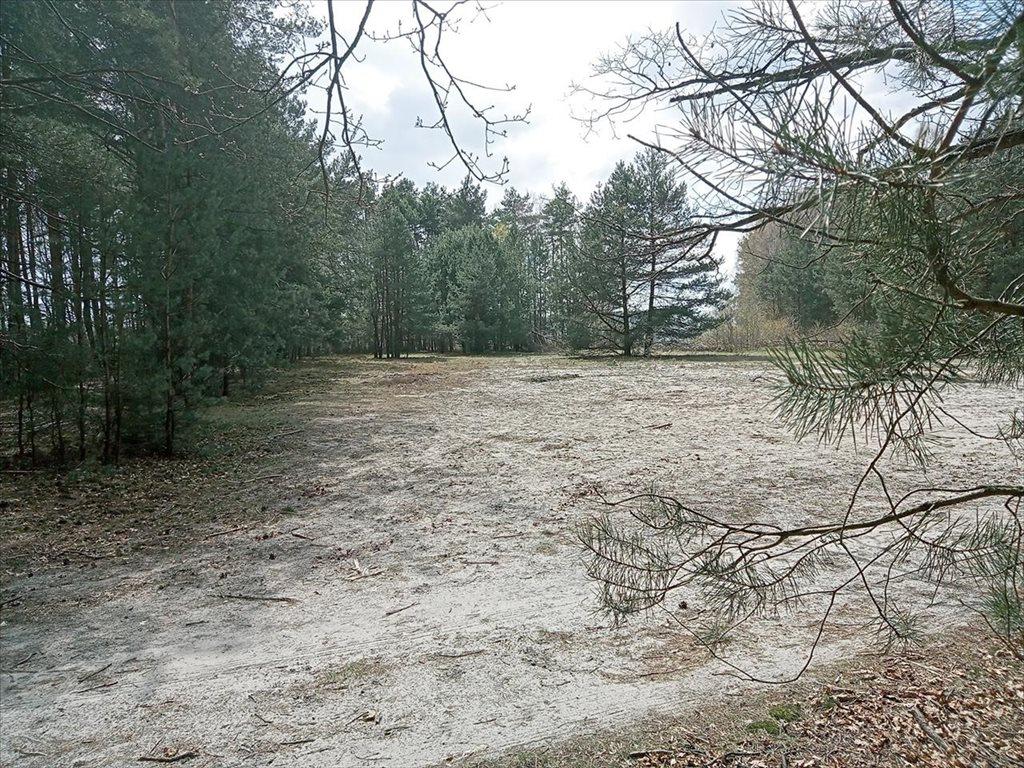 Działka rolna na sprzedaż Wola Karczewska, Wiązowna  6000m2 Foto 10