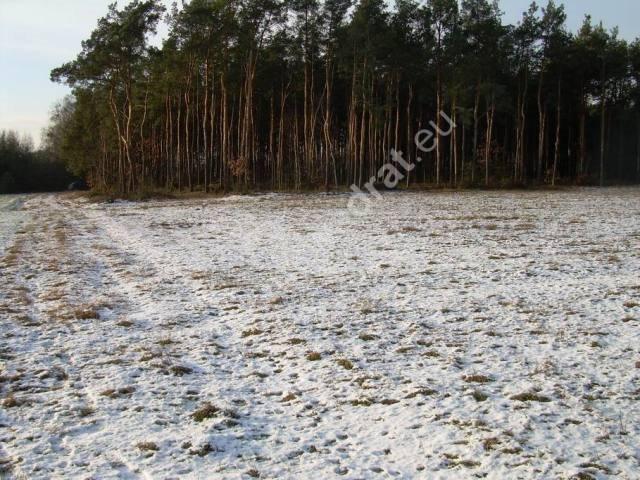 Działka rolna na sprzedaż Stanisławów  3000m2 Foto 4