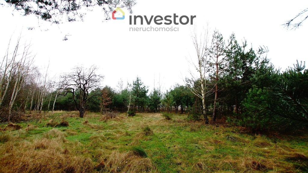 Działka leśna z prawem budowy na sprzedaż Bukowa Wielka  39157m2 Foto 7