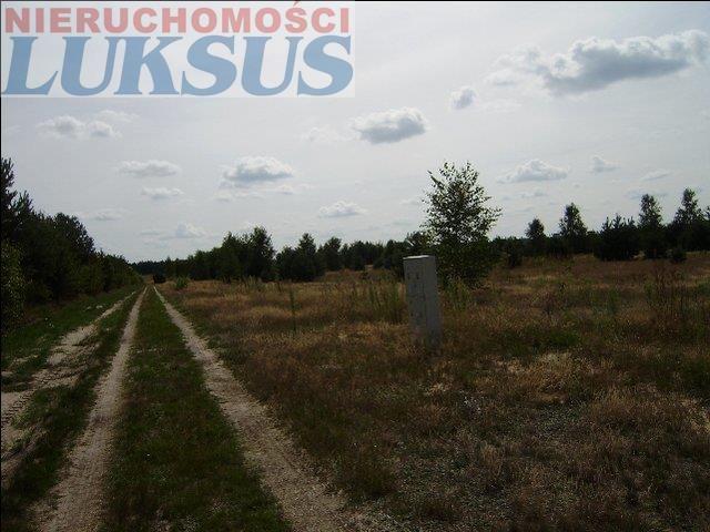 Działka rolna na sprzedaż Mirowice  5000m2 Foto 3