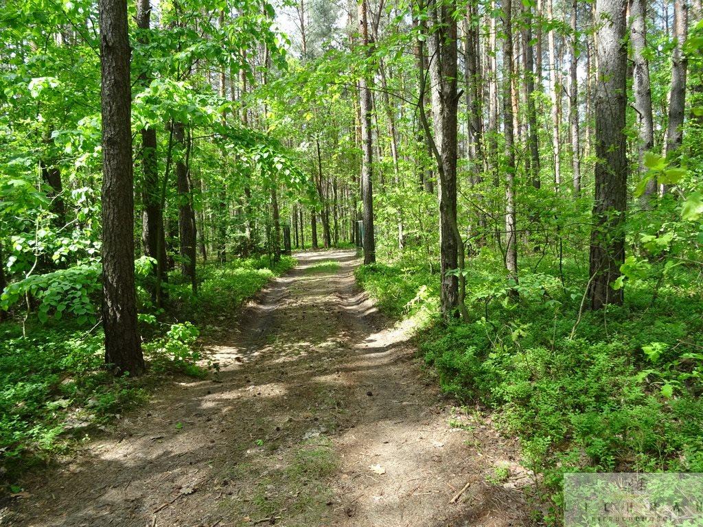 Działka leśna z prawem budowy na sprzedaż Kwiatkowice-Las  2420m2 Foto 1