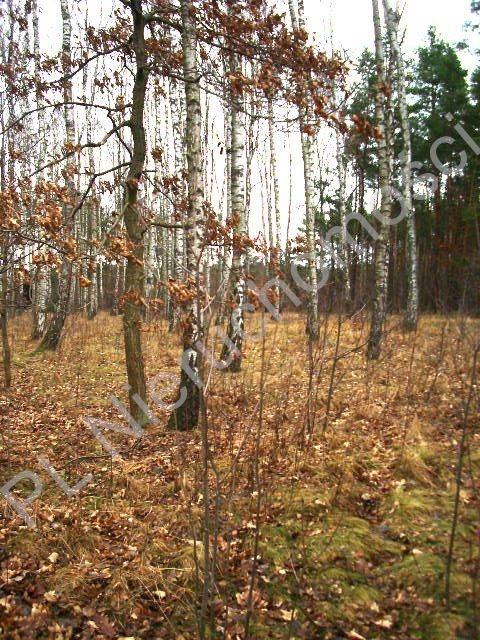 Działka leśna na sprzedaż Lesznowola  1918m2 Foto 2