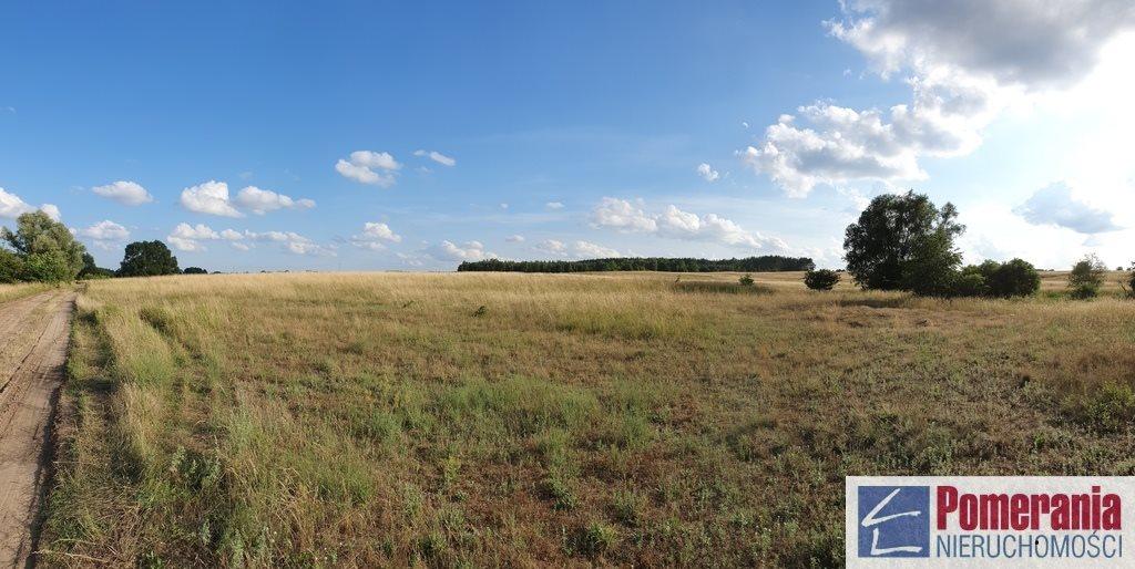 Działka rolna na sprzedaż Wąwelnica  37300m2 Foto 3