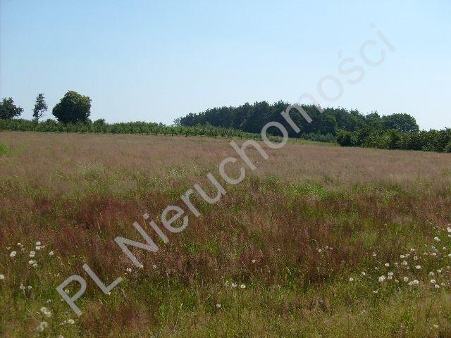 Działka rolna na sprzedaż Wygnanka  10000m2 Foto 1