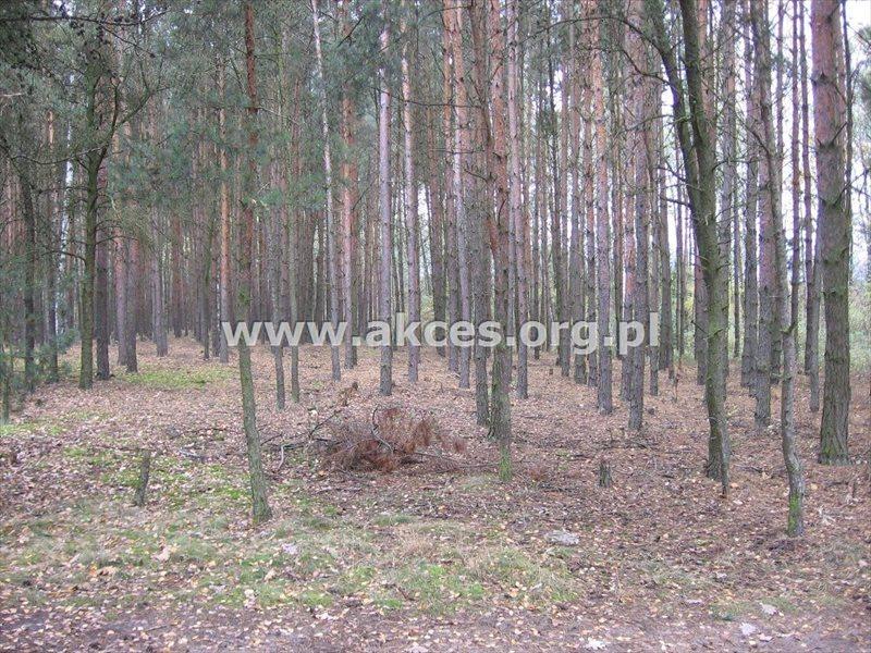 Działka leśna na sprzedaż Kędzierówka  2800m2 Foto 2