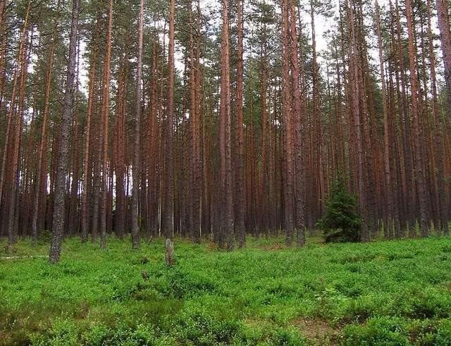 Działka leśna na sprzedaż Choszczno  16700m2 Foto 1