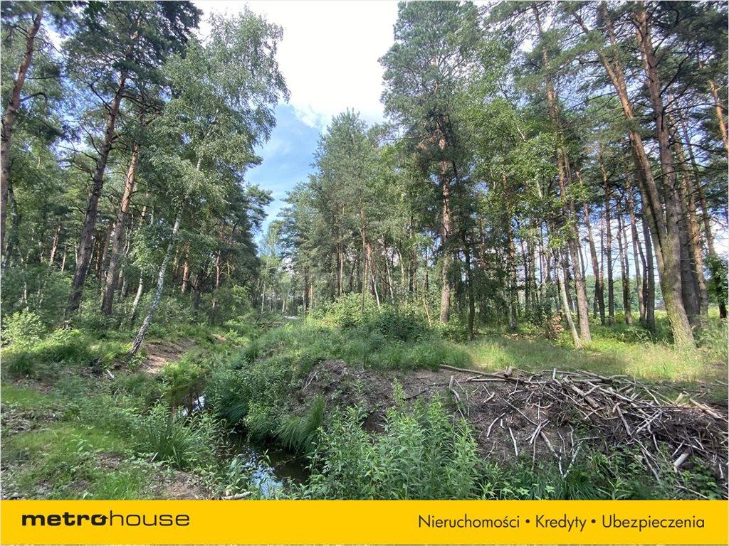 Działka leśna na sprzedaż Władysławów, Lesznowola  3128m2 Foto 9