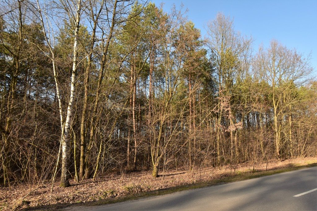 Działka leśna z prawem budowy na sprzedaż Nowy Świat  2770m2 Foto 1
