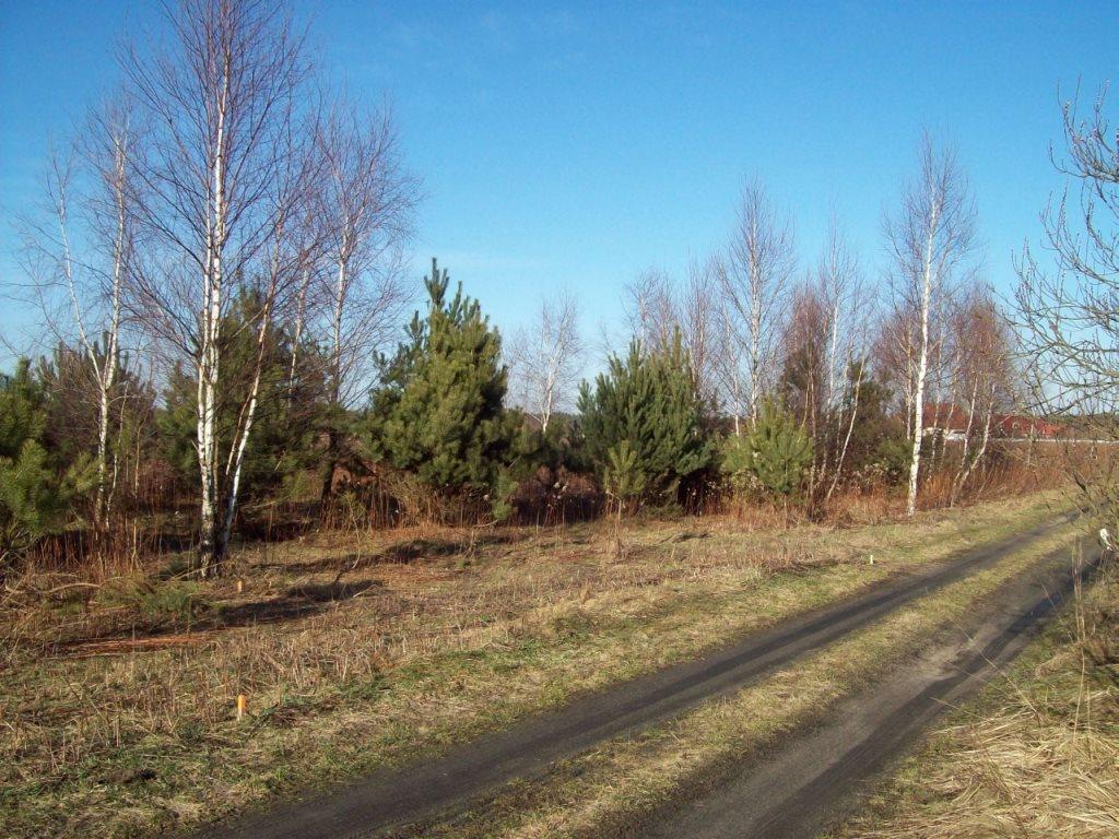 Działka budowlana na sprzedaż Miłoszyce  800m2 Foto 2