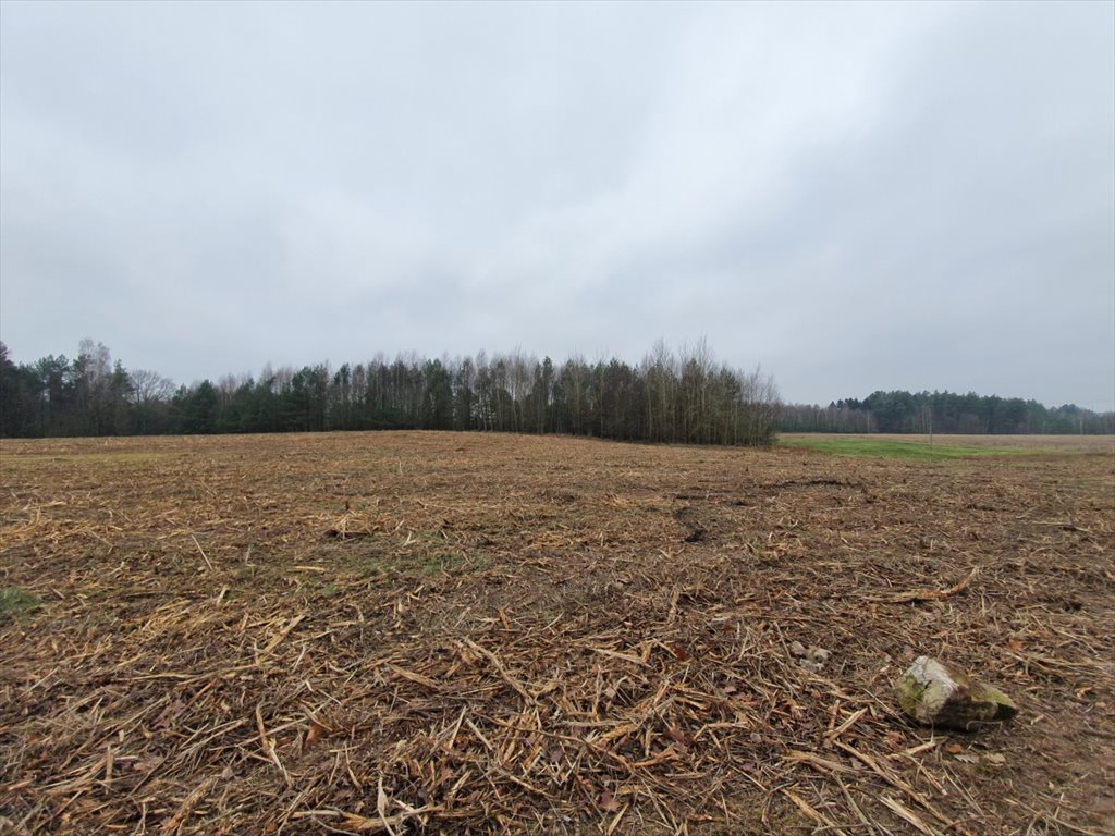 Działka rolna na sprzedaż Donimierz, Mgieł Porannych  3004m2 Foto 4