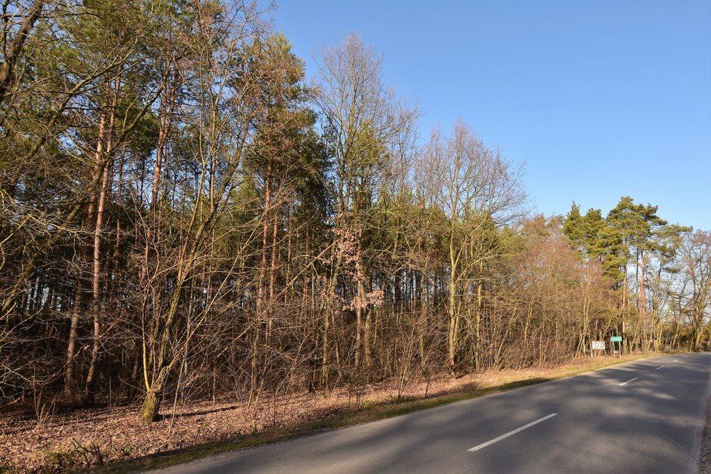 Działka leśna z prawem budowy na sprzedaż Nowy Świat  2770m2 Foto 4