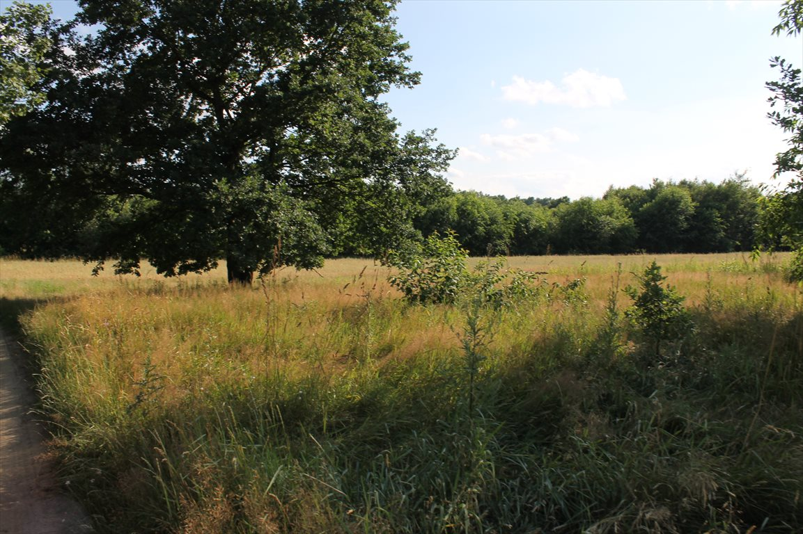Działka rolna na sprzedaż Łagiewniki Nowe  9500m2 Foto 13