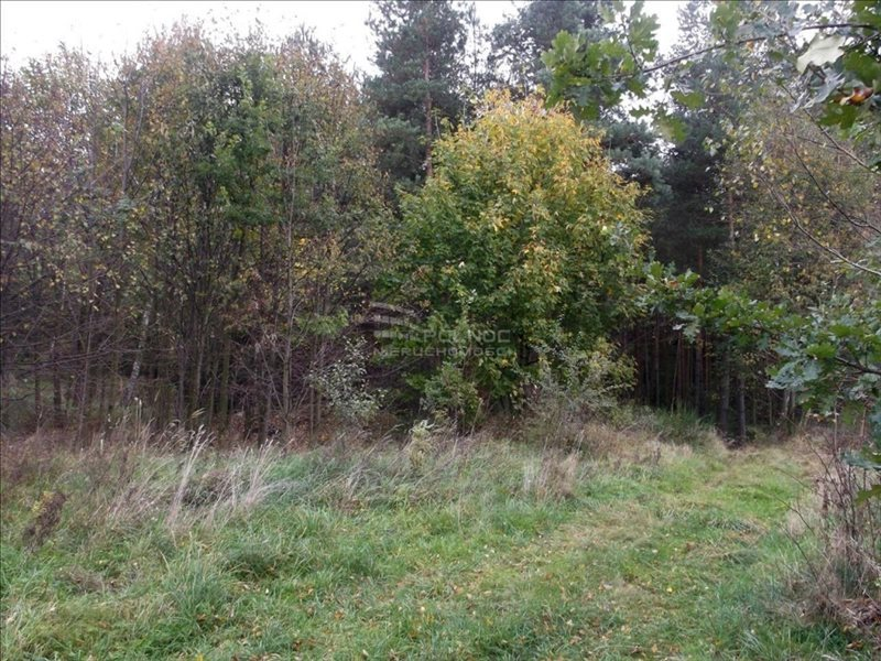 Działka leśna na sprzedaż Bolesławiec, Zabobrze  21908m2 Foto 8