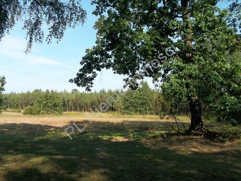 Działka rolna na sprzedaż Stanisławów  15500m2 Foto 3